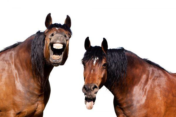 Hästar kan kommunicera med symboler