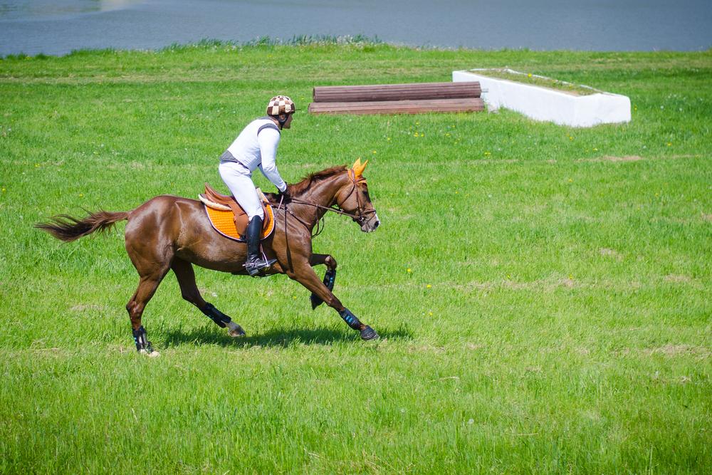 Forskare söker säkrare kortisonbehandling av häst
