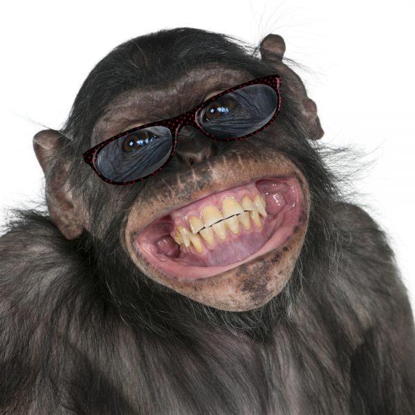 Gamla dvärgschimpanser behöver glasögon