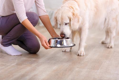 Larm om vanvårdade kaniner i hundfoder