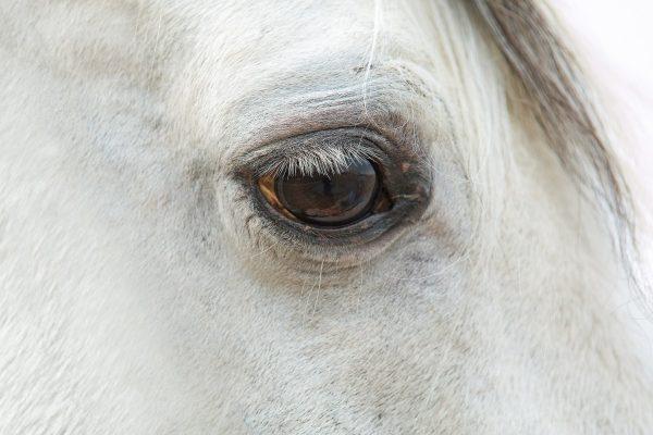 Synmätningsmetod anpassad för häst