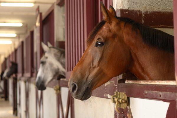 Nytt protokoll kan ge bättre hästvälfärd