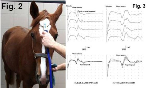 Strömsholm har nytt test för halta hästar