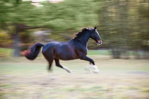 Fler hästar än mjölkkor – och de lever tätortsnära